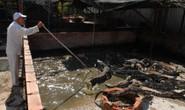 Cá sấu Việt lệ thuộc thị trường Trung Quốc