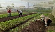 Ưu tiên vốn cho nông nghiệp sạch