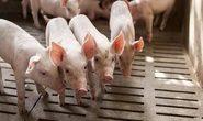Kháng sinh trong chăn nuôi làm tăng vi khuẩn kháng thuốc