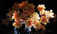 Trao Giải Mai Vàng 2015: Cảm xúc, ánh sáng và sắc màu