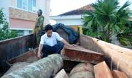 Xã bắt gỗ lậu, trạm bảo vệ rừng lại bảo gỗ thu gom.