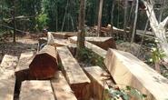 Cận cảnh lâm tặc phá nát rừng, kiểm lâm vẫn mật phục
