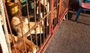 Hàn Quốc khai tử chợ thịt chó lớn nhất nước