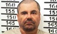 Mexico bắt chuyên gia rửa tiền của trùm ma túy Guzman