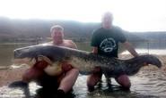 Ông lão 70 tuổi câu cá trê 90 kg