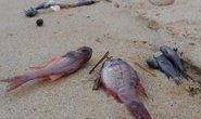 Ăn cá chết bất thường, một bé gái ngộ độc phải cấp cứu
