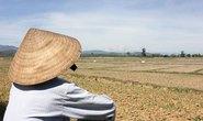 Ruộng đồng khô hạn, dân lo thiếu ăn