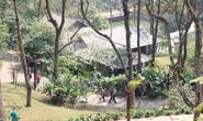 Xây resort ở Vườn Quốc gia Ba Vì: Nể nang nên để làm bừa