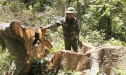 Thủ tướng chỉ đạo đóng cửa rừng
