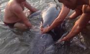 Người dân Đà Nẵng cứu cá heo mắc cạn