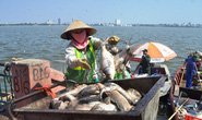 Chủ tịch Hà Nội báo cáo Chính phủ 200 tấn cá chết ở hồ Tây