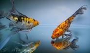 Thẩn thờ trước hàng trăm loài cá cảnh
