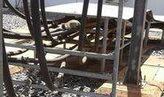 Kenya: Cả nước mất điện vì một con khỉ