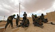 IS bắt cóc hơn 900 người Kurd