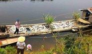 Phạt nhà máy xả thải làm cá chết hàng loạt 480 triệu đồng