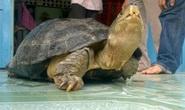 Bắt được rùa 14 kg, ôm ngủ suốt đêm vì sợ mất