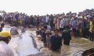Clip hàng ngàn người giải cứu cá voi 17 tấn mắc kẹt trên bãi biển