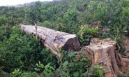 Phá nát rừng đầu nguồn