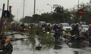 Hà Nội: Gió giật kinh hoàng, hàng trăm người bỏ xe chạy