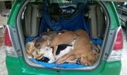 """Truy tìm 2 """"cẩu tặc"""" thuê taxi chở 16 con chó trộm"""