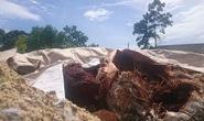 Công ty về môi trường chôn lấp hàng trăm tấn chất thải nghi độc hại