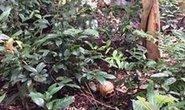 Điều tra vụ một thi thể lìa đầu trong rừng