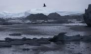 Bắc Cực nóng kỷ lục dịp Giáng sinh