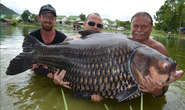 Bắt được cá chép khổng lồ nặng hơn 1 tạ