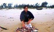 Cá chết bất thường trôi dạt vào bờ biển Quảng Trị