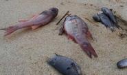Đóng cửa họp tìm nguyên nhân cá chết hàng loạt