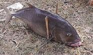 Nước biển vùng cá chết bị nhiễm kim loại nặng