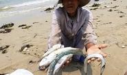 17 giờ chiều nay, Chính phủ công bố thủ phạm gây cá chết