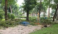 Người phụ nữ bị cây đè ở công viên Tao Đàn đã tử vong