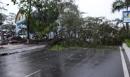 Cây cổ thụ cao hàng chục mét ngã ngang đường