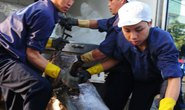 Đánh bắt cá ngừ kiểu Nhật gặp khó