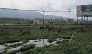 Bỏ hoang hàng trăm hecta đất