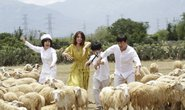 Việt Hương, Hoài Linh và Trấn Thành đối đầu qua phim chiếu Tết Dương lịch