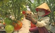 Nơi hội tụ nông nghiệp công nghệ cao