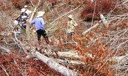 Cán bộ tiếp tay để mất rừng?