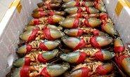 Trung Quốc giảm mua, cua biển Cà Mau rớt giá