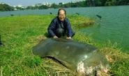 Hồ Gươm có cần rùa?