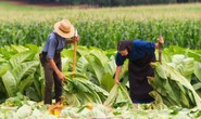 Nông sản Bắc Mỹ rầm rộ tìm đường vào Việt Nam
