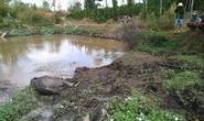 Phát hiện voi rừng chết trong nương rẫy ở Đắk Lắk
