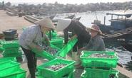 Ô nhiễm biển miền Trung: Cá nào ăn được, cá nào chưa?