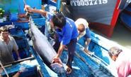 Tư thương ép giá cá ngừ đại dương