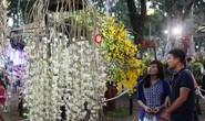Hơn 700.000 lượt khách tham quan Hội Hoa Xuân