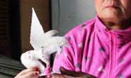 Vụ thảm sát Bình Phước: Nguyễn Hải Dương xin ân xá