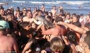 Bị du khách bắt chụp hình tự sướng, cá heo con chết thảm