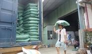 Giá lúa gạo tăng do biến đổi khí hậu