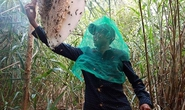 Về U Minh Hạ mùa gác kèo ong